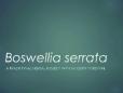 Boswellia Webinar-long
