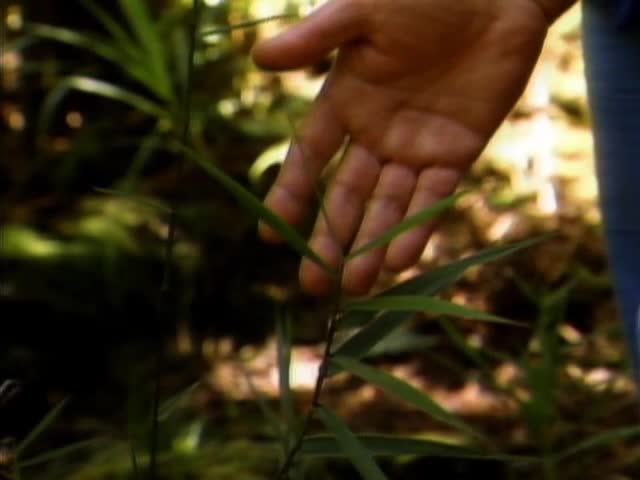 "William ""Bill"" Mull gives a tour of the ʻŌlaʻa Forest Reserve on the island of Hawaiʻi tape 1"
