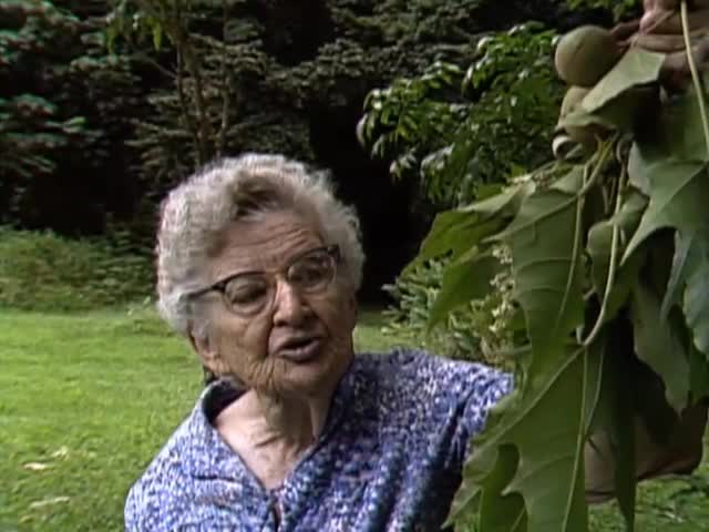 "Interview with ethnobotanist Dr. Beatrice ""Bea"" Krauss tape 2"