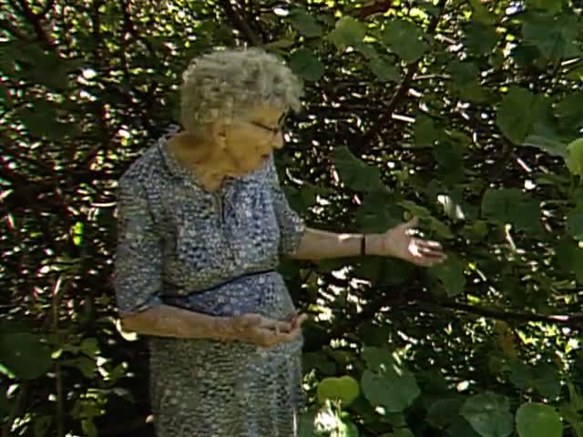 "Interview with ethnobotanist Dr. Beatrice ""Bea"" Krauss tape 7"
