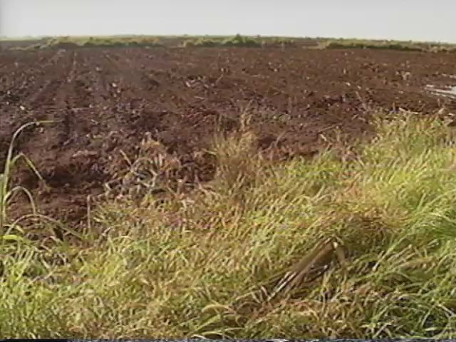 Waipahu Sugar Plantation field footage