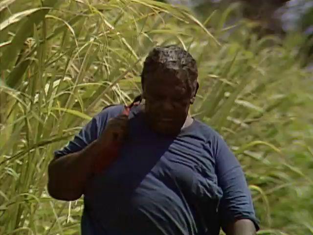 B-roll of Philibert Secretario in Lahaina sugar cane field 6/27/89