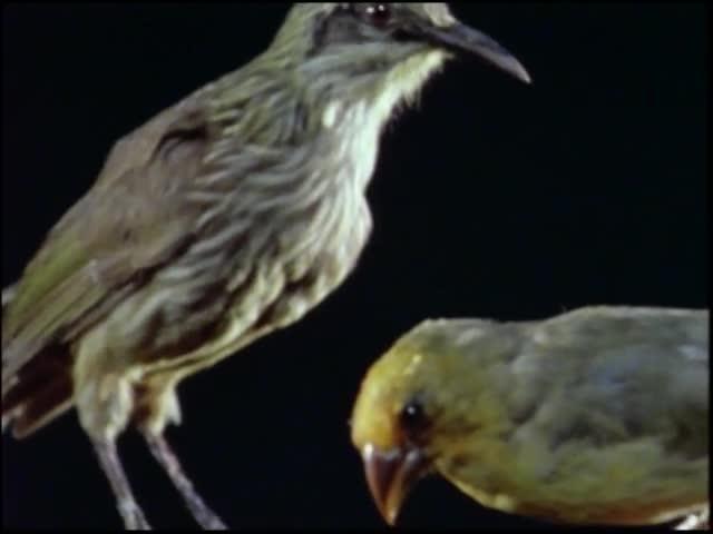 Hawaiian Birds 1990