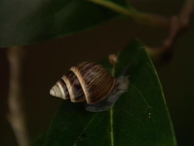 Hawaiian snails at Pahole Reserve