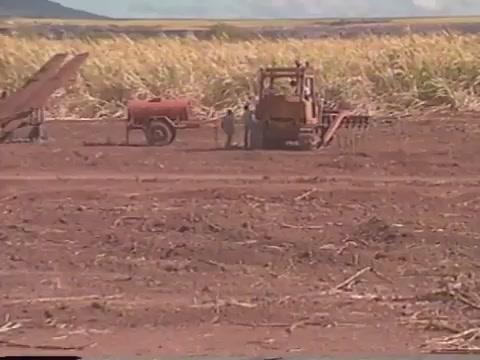 Waipahu Sugar Plantation field footage and cane fire