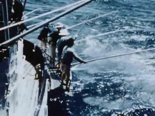 Tuna behavior (Gooding / Magnuson)