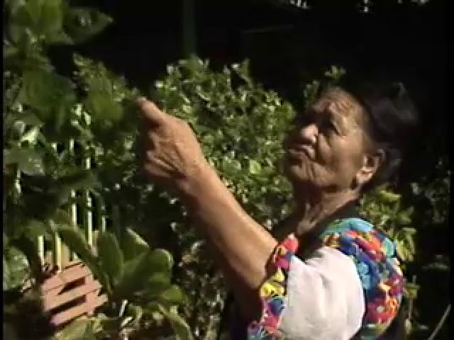 Hale Ola : A Hawaiian Cultural and Healing Resource Center