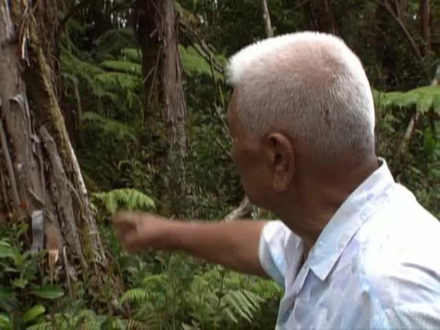 """""""Hawaiian Medicine Man"""" Kahuna lāʻau lapaʻau Henry Auwae tape 3"""