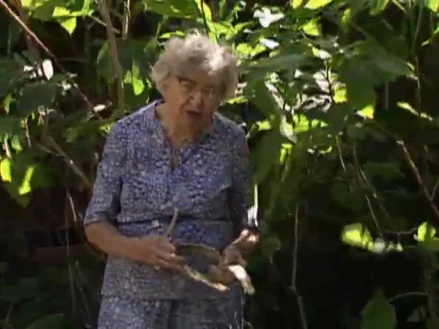 "Interview with ethnobotanist Dr. Beatrice ""Bea"" Krauss tape 6"