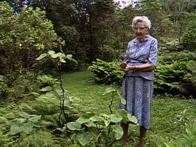 "Interview with ethnobotanist Dr. Beatrice ""Bea"" Krauss tape 1"