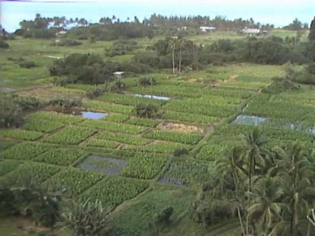 Scenics of taro loʻi