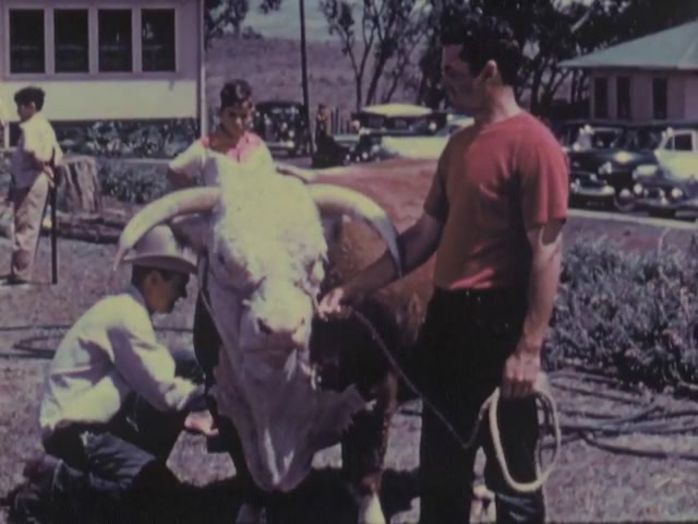 Lei Cutting Ceremony, Cows, Horses