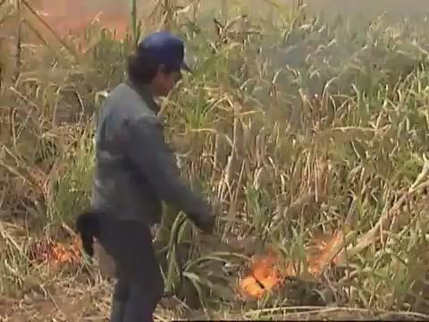 Cane fire at Kāʻu sugar field